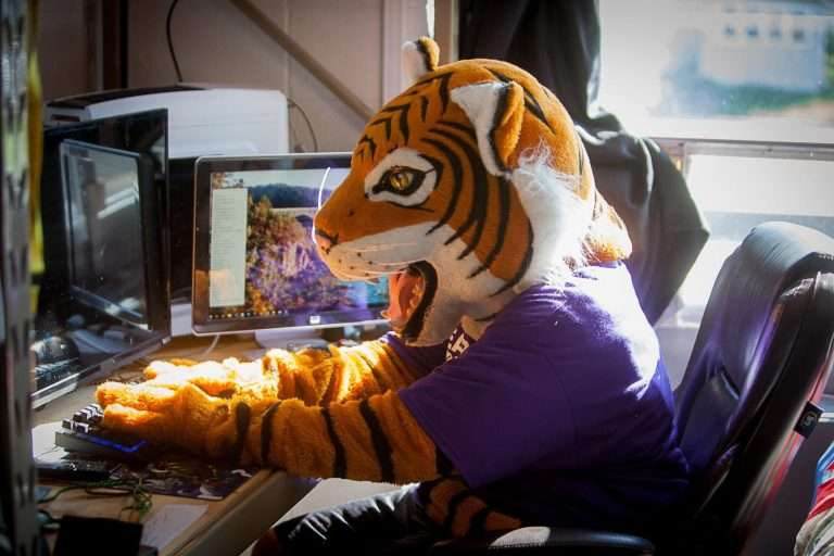 Wesley Tiger Studying